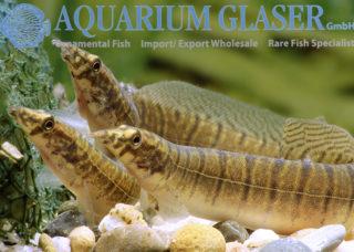 Welcome to the website of Aquarium Glaser - Aquarium Glaser GmbH