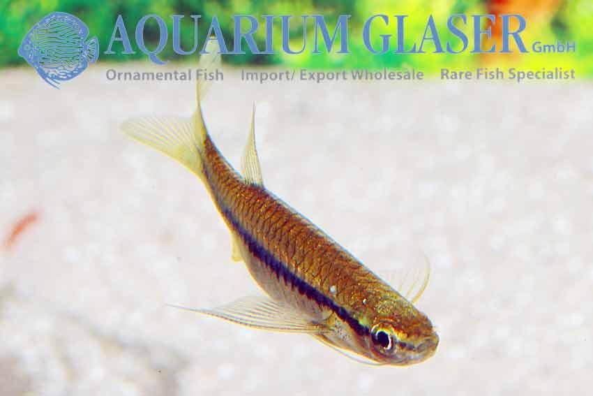 Paul_, Autor auf Aquarium Glaser GmbH - Seite 53 von 189