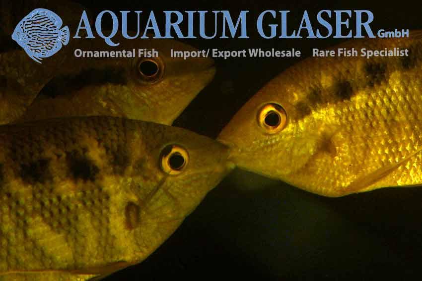 Rare species of fish