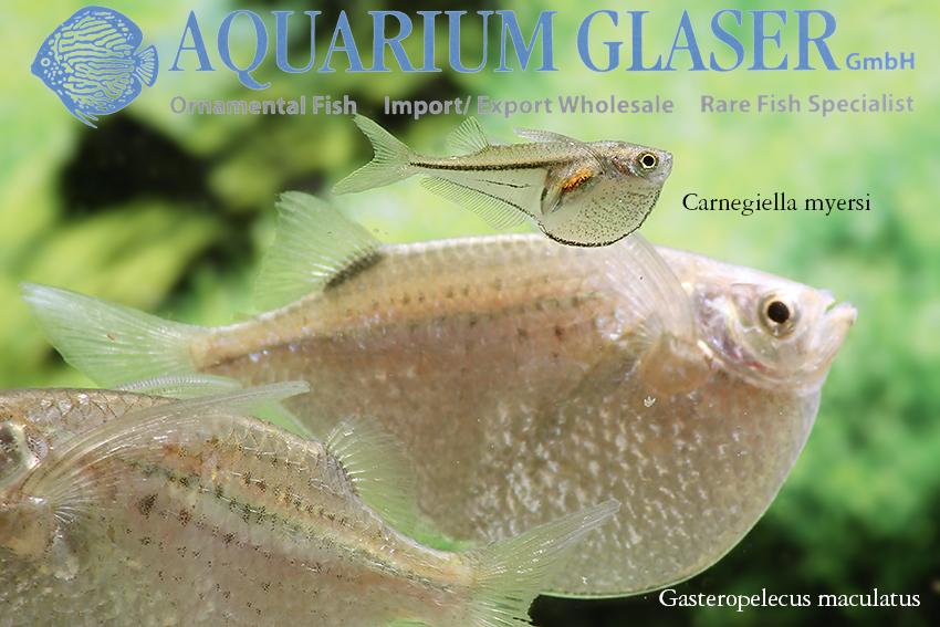 www.aquariumglaser.de