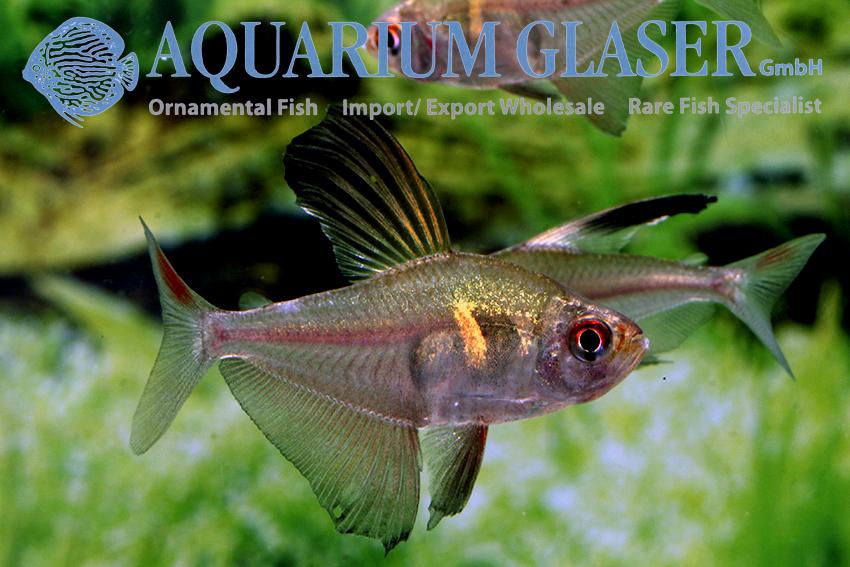 Tetra Aquarium Glaser Gmbh